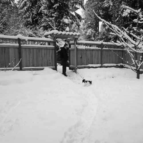 "the dog is not 100% behind this ""walk in the snow"" plan."